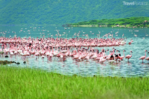 jezero Bogoria