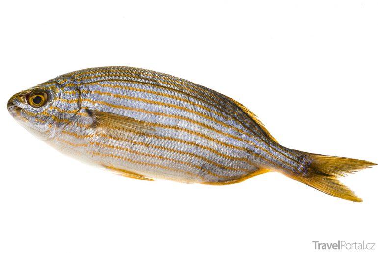Sarpa salpa neboli očnatec obecný