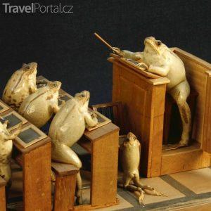 Le Musée des grenouilles (Muzeum žab) v městečku Estavayer-le-Lac