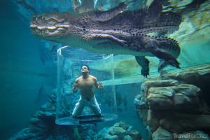 zábavní park Crocosaurus Cove