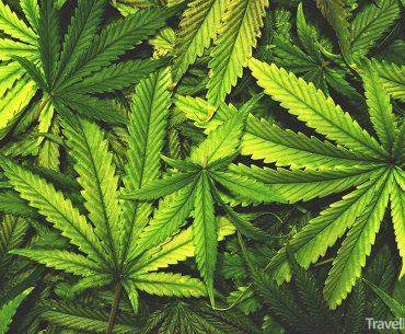 Nipton se promění v marihuanový ráj!