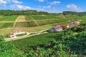 vinohrady v okolí vsi Chablis