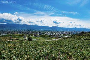vinice u Katsunumy