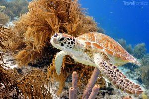 želva u korálového útesu