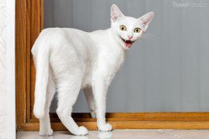 legrační zvířata aneb bílá kočka v akci