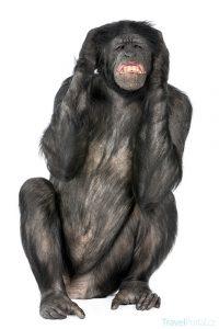 legrační zvířata aneb šimpanzice v akci