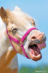 legrační kůň