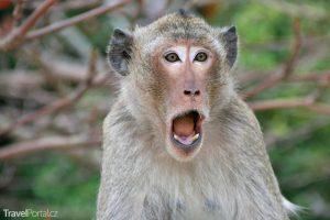 legrační opice