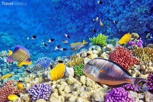 Rudé moře v destinaci Sharm El Sheikh