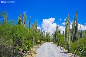 mexické údolí Tehuacán-Cuicatlán