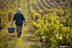 vinařská oblast Beaujolais