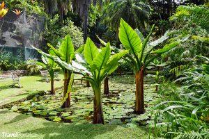 botanická zahrada ve městě Victoria