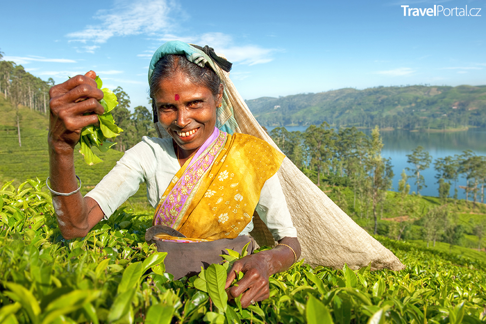 sběračka čaje na Srí Lance