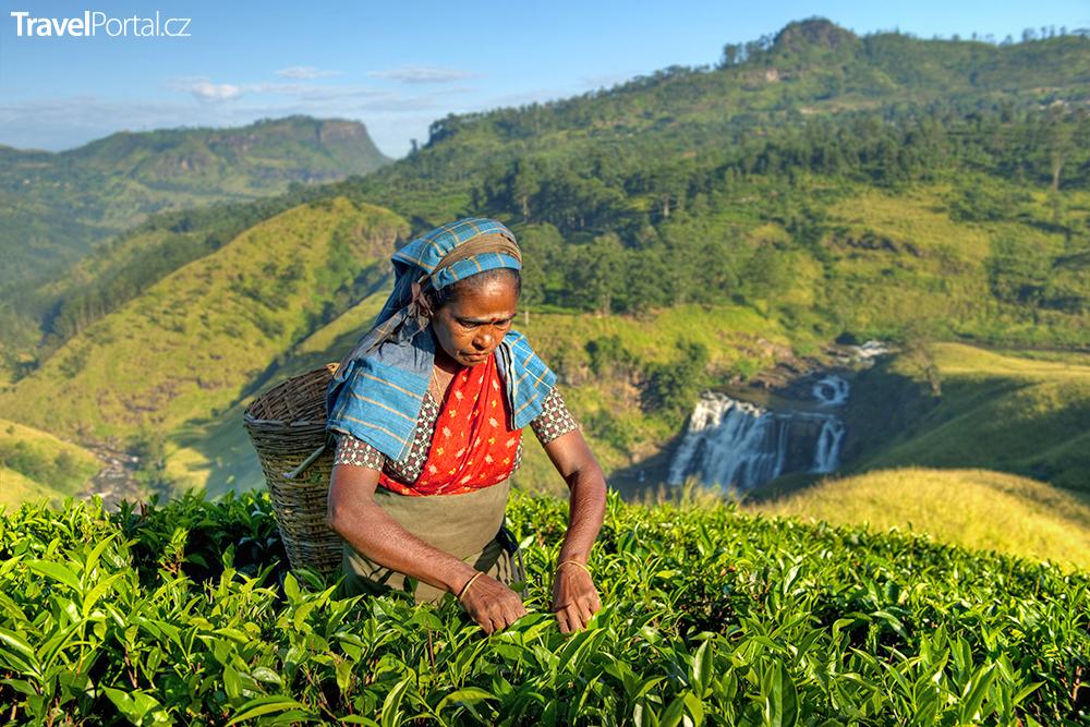 čajové plantáže na Srí Lance lákají turisty