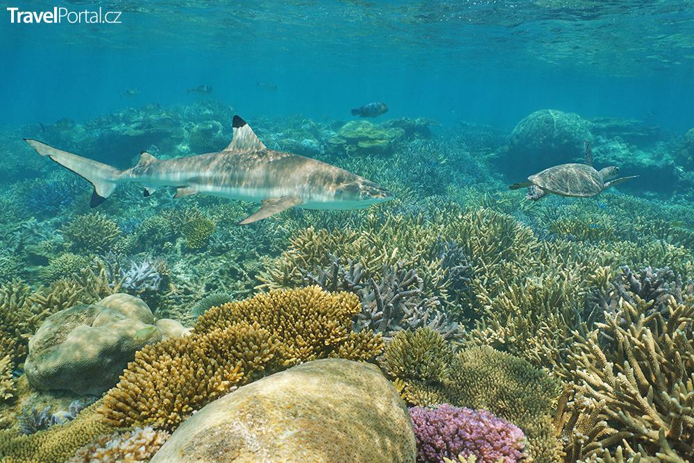korálový útes, malý žralok a želva