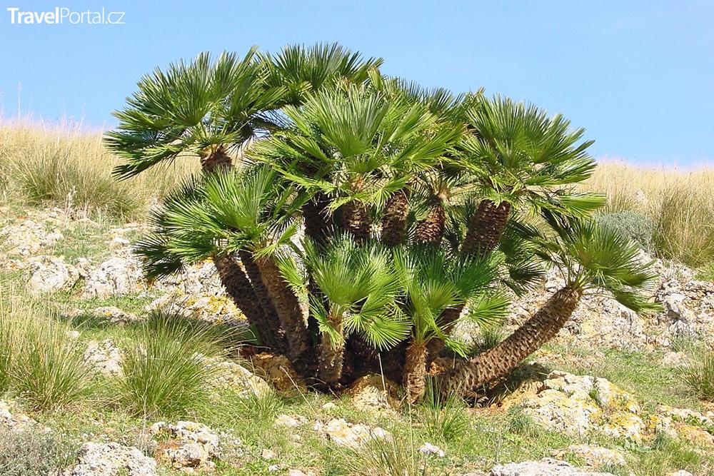 flóra v Cabo de Gata