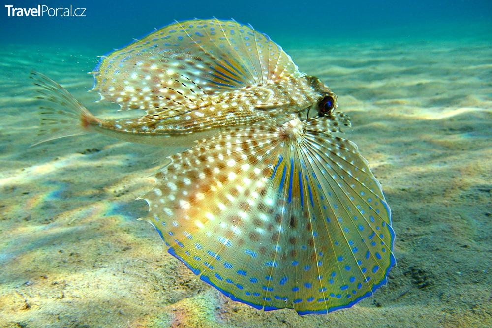 podmořský svět v Cabo de Gata