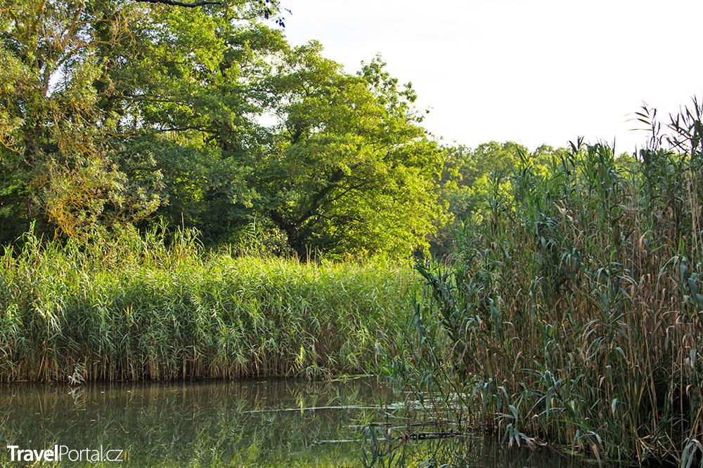 přírodní rezervace Baltata