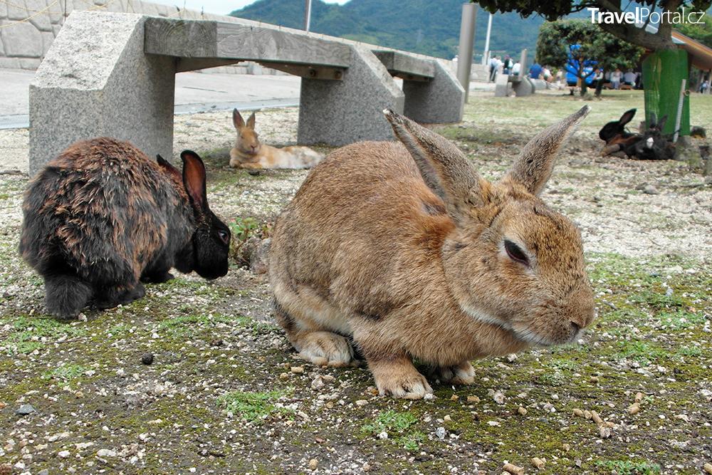 králíci na japonském ostrově