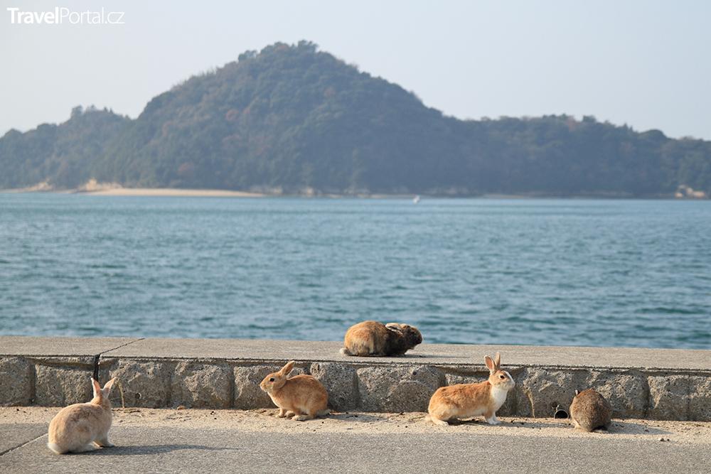 králíci na ostrově Okunoshima