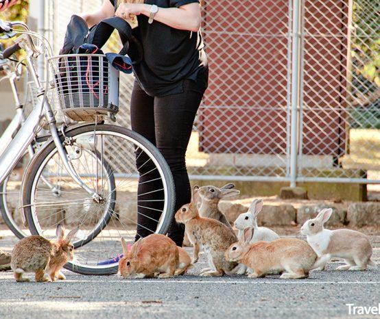 Okunoshima: Králičí ostrov v Japonsku je turistickou atrakcí