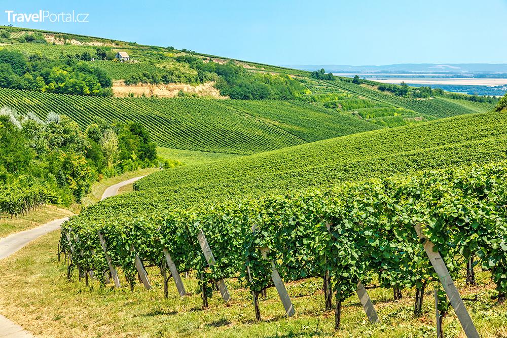 vinařský kraj Villány