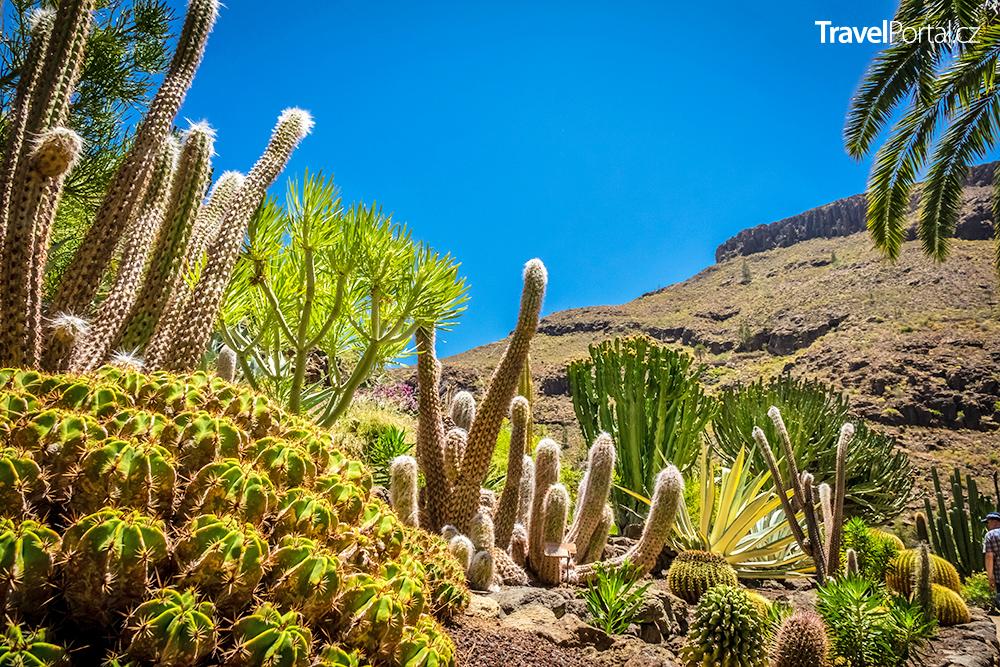 kaktusy na ostrově Gran Canaria