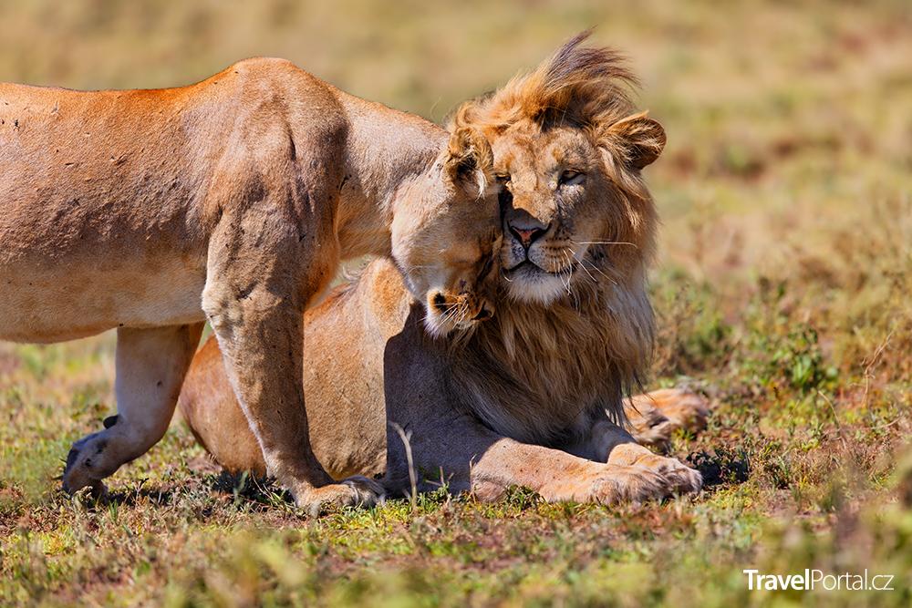 safari v Tanzanii