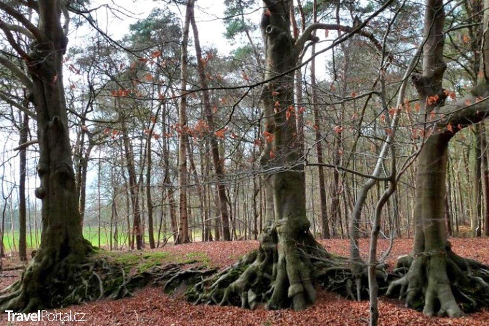 vřesoviště Oude Buisse Heide