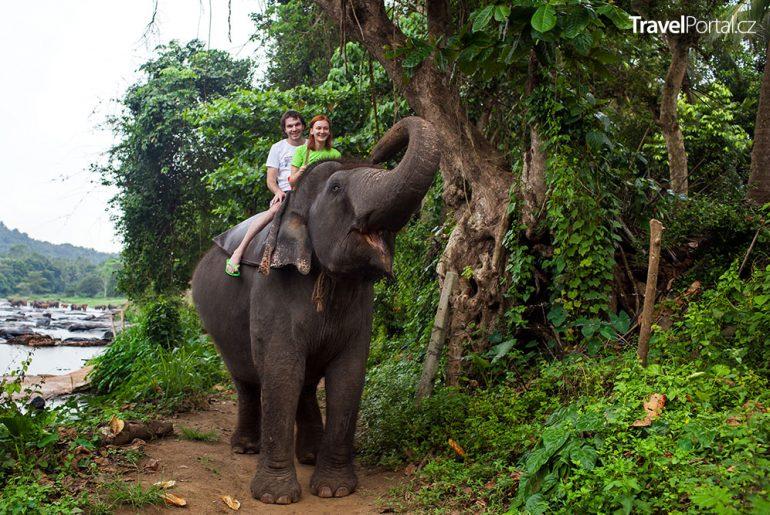 opilci už na Srí Lance nesmějí jezdit na domestikovaných slonech