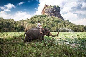 slon na ostrově Srí Lanka